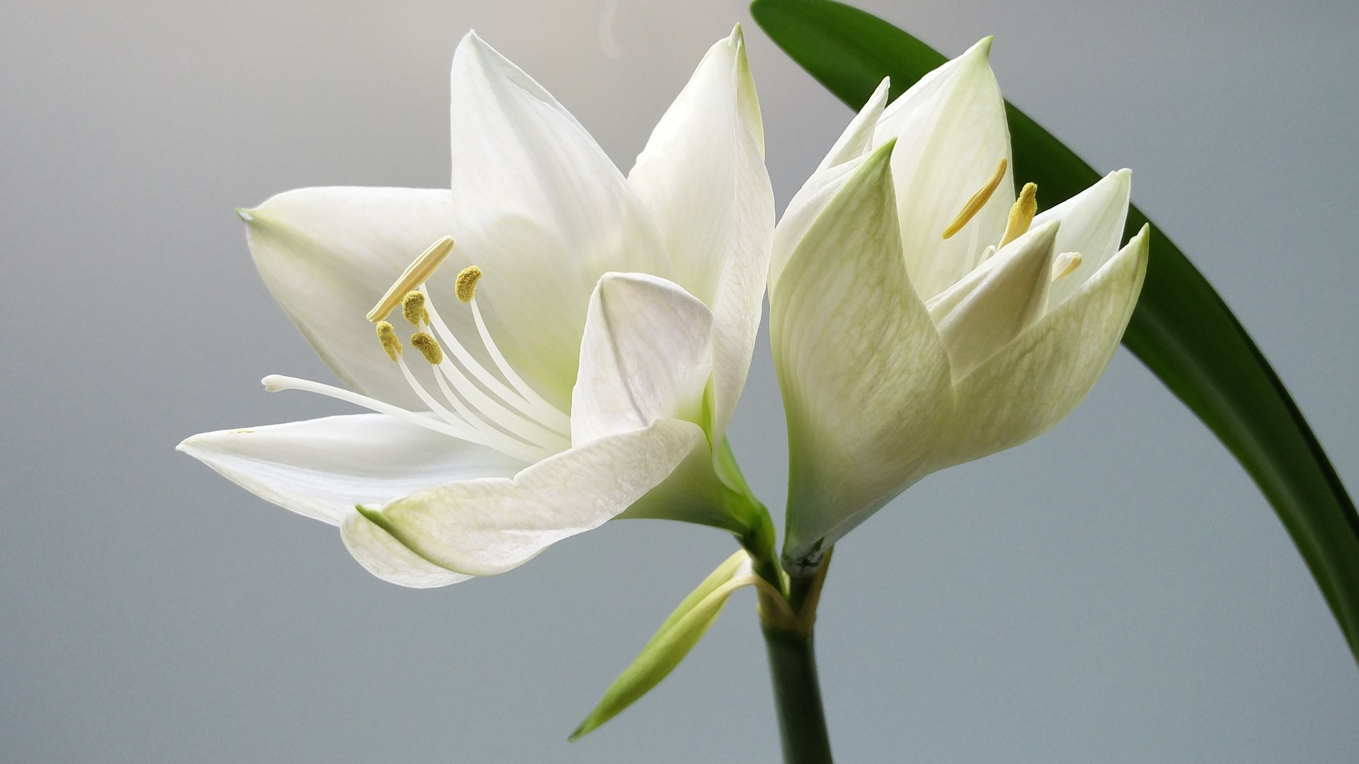 Consider the Lilies: A Reminder of God's Provision | www.therescuedletters.com