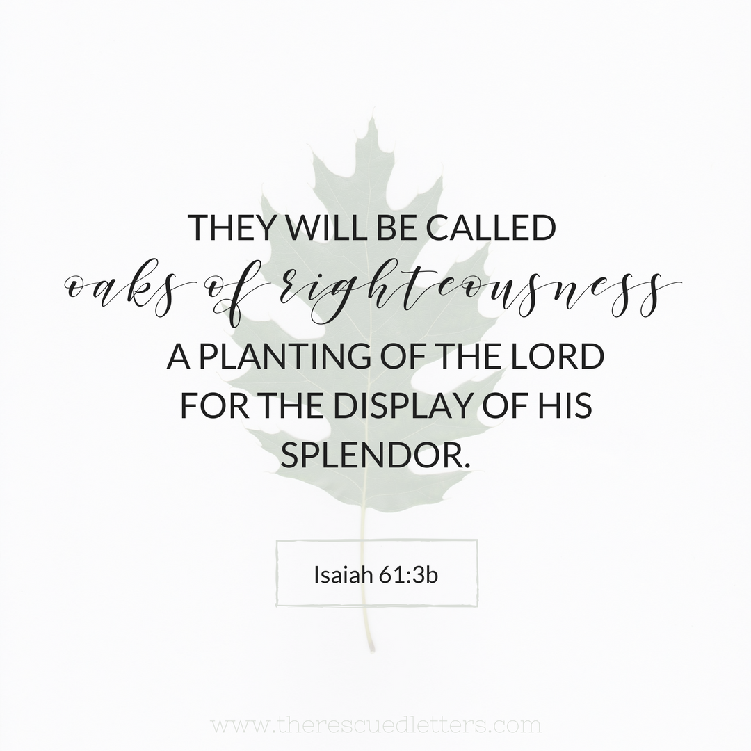 Isaiah 61:3b | www.therescuedletters.com