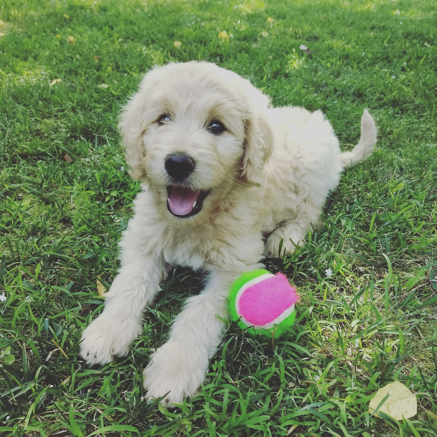 Nala Doodle | www.therescuedletters.com